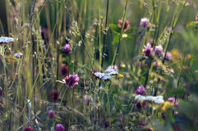 łąki kwietne